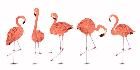 Flamingo pink on white background. Exotic Bird Flamingo. Realistic vector illustration. Ilustracja