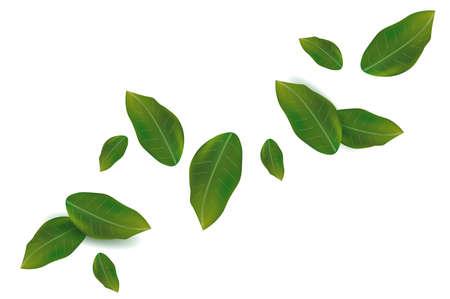 Spring green leaf on white background. Fresh Falling leaf for your design. Vector illustration. Ilustracja