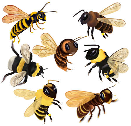 Set Honey bee, wasp, hornet, bumblebee from different angles on white background. Vector icon set.