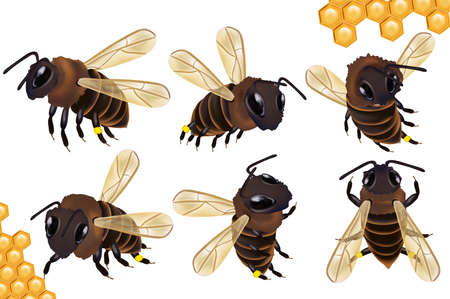 Set Honey bee from different angles on white background. Bee icon with honeycomb. Vector illustration. Ilustracja