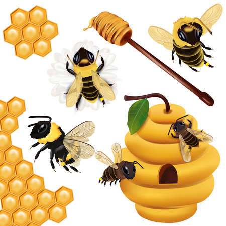 Set Honey bee, wasp, bumblebee, honeycomb, beehive, honey dipper with honey on white background. 3d Vector icon.