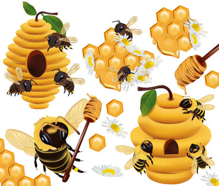 Honey bee, honeycomb, beehive, honey dipper, beeswax, Chamomile flower on white background. 3d Vector illustration.