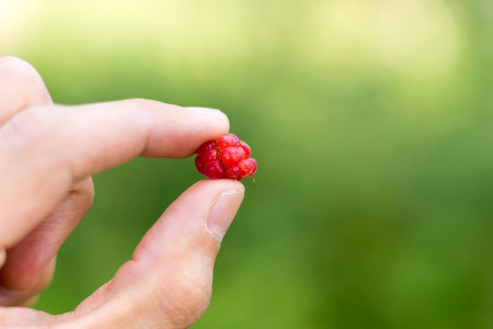 pinched: An european red raspberry pinched between fingers Stock Photo
