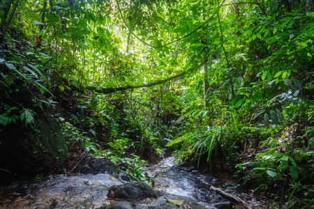 River in rainforest in the jungle of Bukit Lawang, North Sumatra, Indonesia.