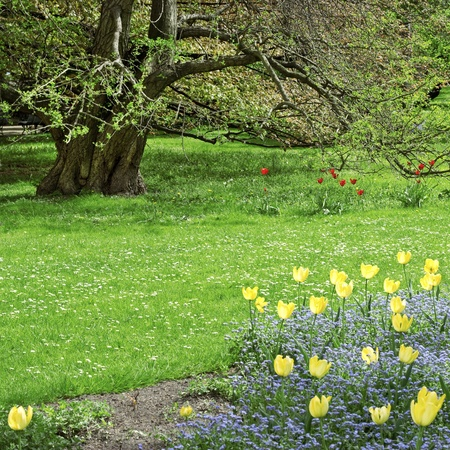 Tree and flower bed with blue flowers red and yellow tulips in a spring park Stock Photo - 13569484