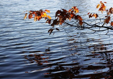 bending over: Autumn branch with leaves bending over the water
