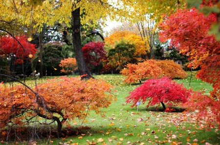 Japanese style garden in autumn  photo