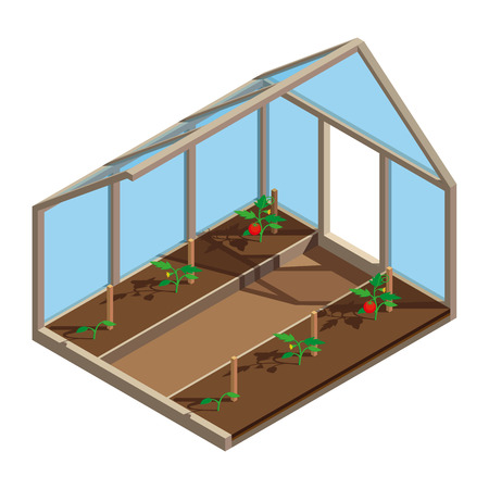 Greenhouse with tomato in 3D design. Tomato Plant growth. Planting process. Hothouse inside view - vector illustration. Illustration