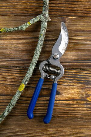 Blue pruning shears with a branch on wood background. 写真素材