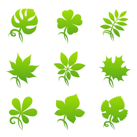 monstera: Leaves. Vector logo template set. Elements for design. Icon set.