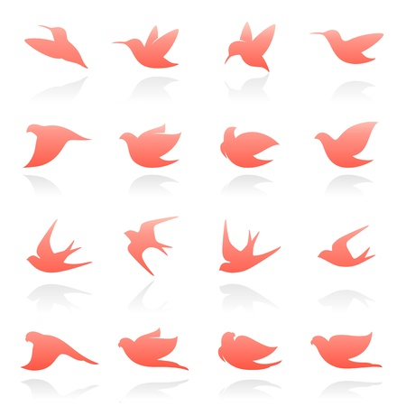 swallow: Birds. Vector logo template set. Elements for design. Icon set.