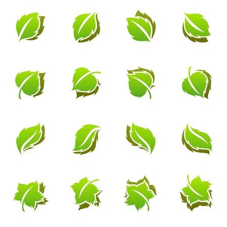 linden flowers: Leaves. Vector logo template set. Elements for design. Icon set.