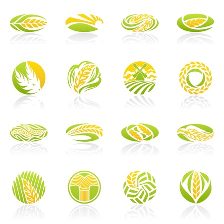espiga de trigo: Trigo y el centeno. plantilla de logotipo conjunto. Elementos para el diseño. Conjunto de iconos. Vectores