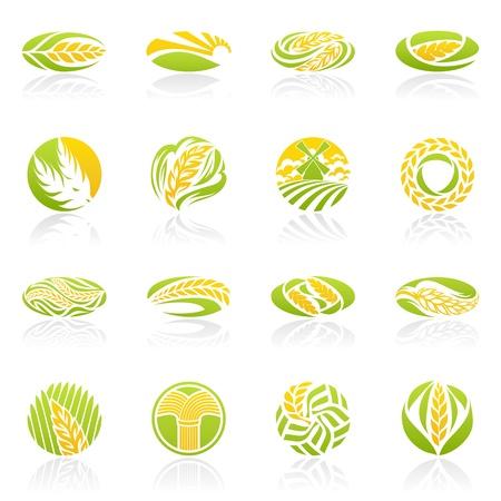 Weizen und Roggen. Logo-Vorlage festgelegt. Elemente für das Design. Icon gesetzt. Logo