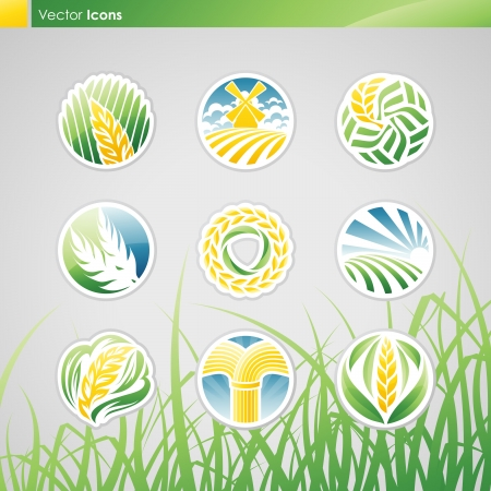 abstract mill: Wheat and rye. Vector logo template set. Elements for design. Icon set. Illustration