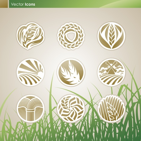 rye: Wheat and rye. logo template set. Elements for design. Illustration