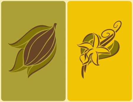 Cocoa bean and vanilla flower with pods. Vector illustration.