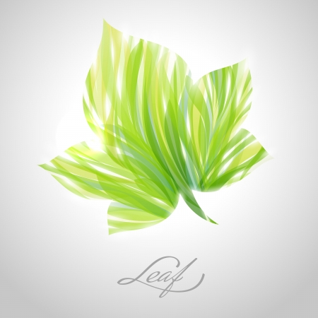 Shiny green striped maple leaf.  Vector