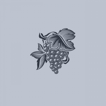 purple grapes: Grape with leaf - Element for design - Vector illustration