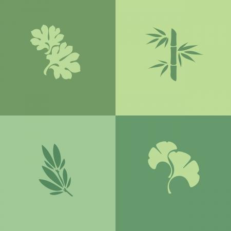 plants species: Foglia - Insieme di elementi di design Vettoriali