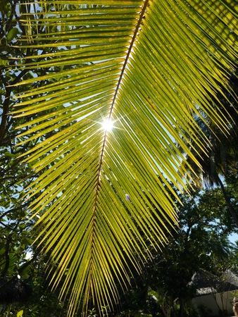 Sunshine through the leaves of palm tree