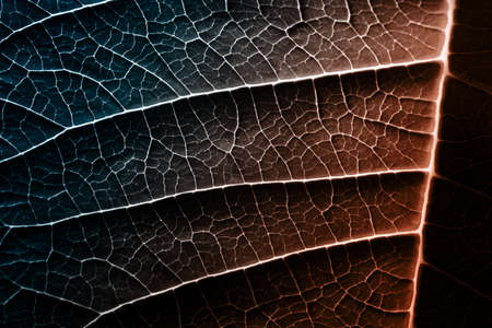 A leaf of a plant photographed with a macro lens. Small details of the plant are visible. Banque d'images - 152556910