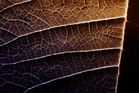 A leaf of a plant photographed with a macro lens. Small details of the plant are visible. Banque d'images - 152553756