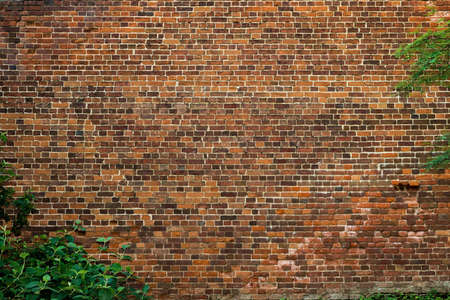 A neat dilapidated brick wall made of old bricks with defects. The frame contains vegetation and trees.