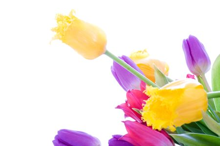 Spring tulips isolated on a white background Stock Photo - 2666034