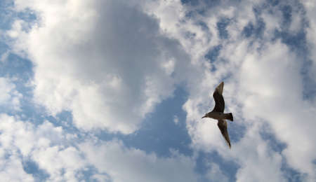 Lonely seagull flying free in the sky