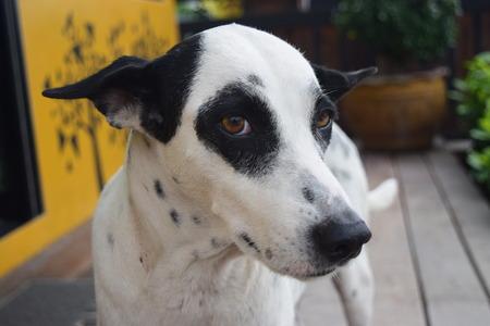 canny: Dog Beautiful Eyes