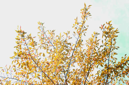 Trees that emit reddish foliage in the autumn blue sky and warm sunlight