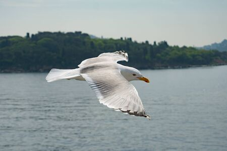 White sea gull flies of the sea landscape with green island.