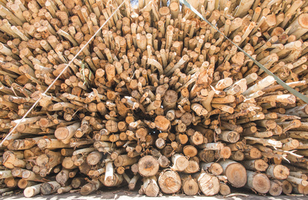 Pile of wood stacked to prepare to the privatization. photo