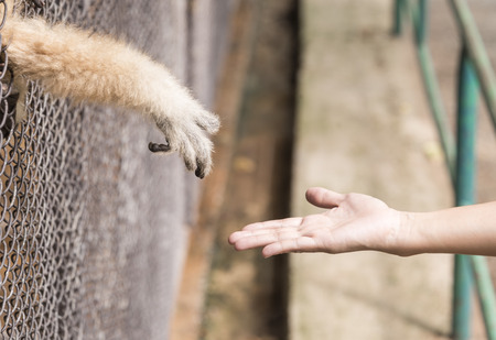 confined: To alleviate the animals were confined to freedom