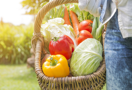 farm fresh: Woman wearing gloves with fresh vegetables in the basket in her hands. Close up
