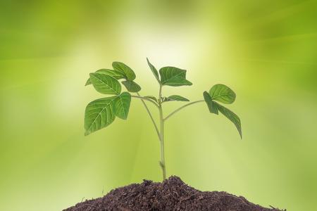 crecimiento planta: Nuevo desarrollo y la renovaci�n como un concepto de negocio de �xito en el liderazgo emergente como un viejo cortar �rbol y una planta fuerte crecimiento en el tronco central como un concepto de apoyo para construir un futuro.