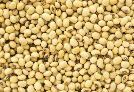 leche de soya: Semillas Primer soja frescos para fondo de alimentos.