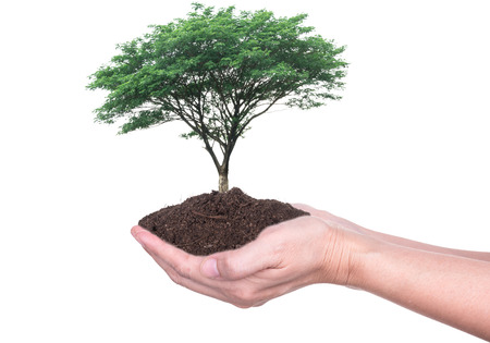 Human hands holding large trees growing in soil on white background. Stock Photo
