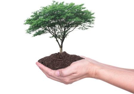 Ludzkie ręce trzymając dużych drzew rosnących w glebie na białym tle.