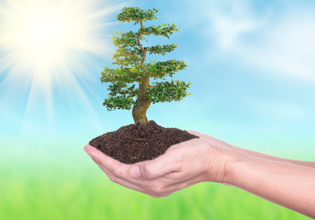 soil conservation: Human hands holding large trees growing in soil on Nature Backgrounds