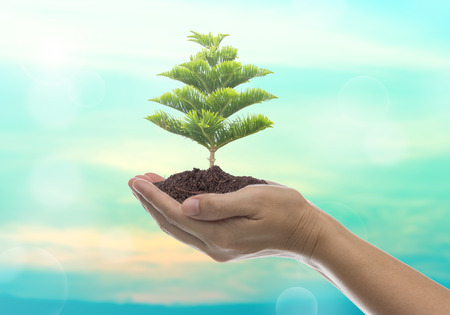 large trees: Human hands holding large trees growing in soil.