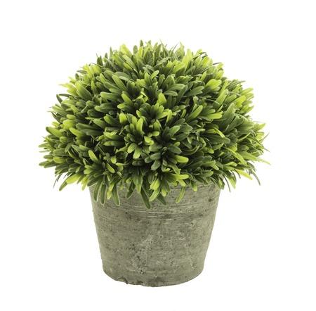 flowerpot: Decorative grass in flowerpot isolated on white background.