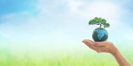 Earth in hands, growing big tree on soil eco bio globe in clean natural background. World environment day and green concept.