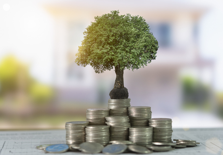 The tree are grow up on coins stack and real estage background.  Concept of finance and growth investment. Stock Photo