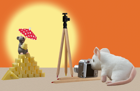 laths: The mouse photographed a cheese pyramid with a model. Stock Photo