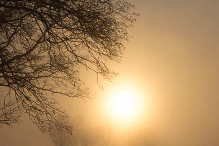 The sun sinks in the mist and leaves the trees disappearing. Reklamní fotografie