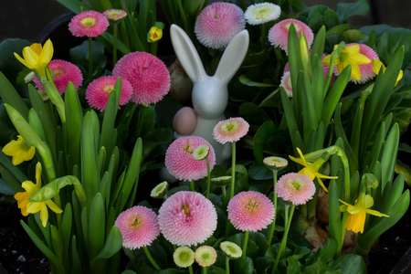 A hare hides and the eggs in the flowers.