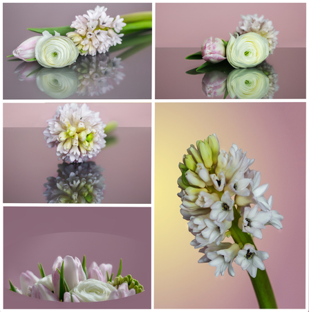 In a collage United are different spring flowers. Stock Photo