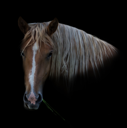 The horse presents itself with grass in its mouth. Stok Fotoğraf